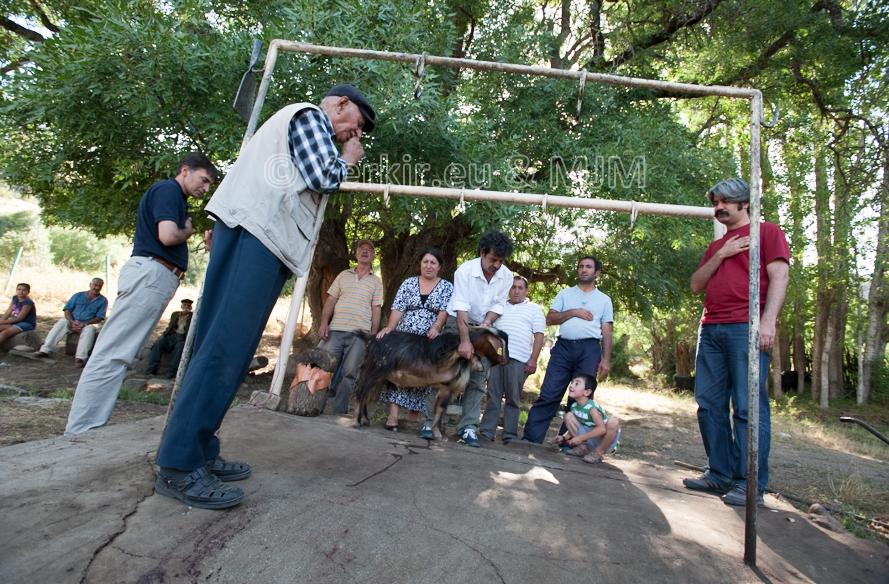 Prière du dédé (religieux Alévi) avant de sacrifier une chèvre Dersim, Juillet 2011